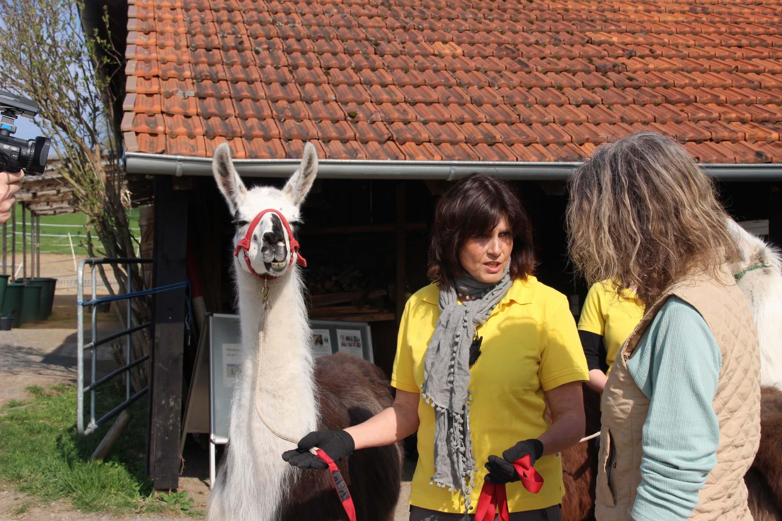 Lama führen (2)