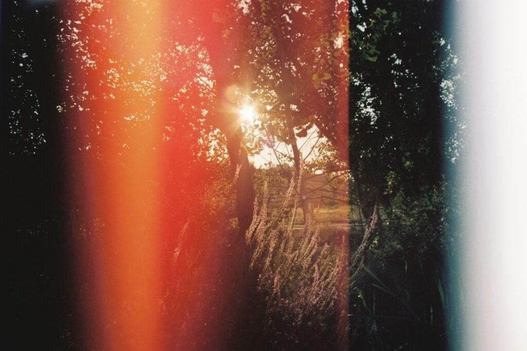 Wald im Lichtprisma