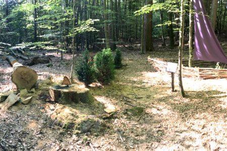 Einfach abgesägt wurde der Baum, der selbst Teil der Installation war. Bildquelle: Stiftung Bewusstseinswissenschaften